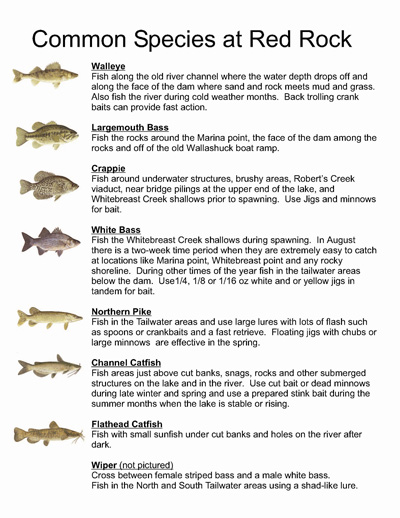 Lake red rock fishing information for Facts about fishing